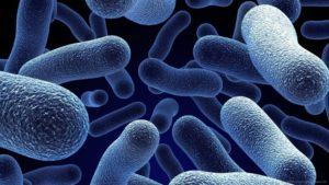infezioni prostata batteri