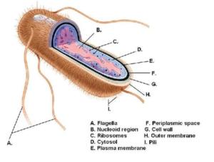 infezioni urinarie - infezioni basse vie urinarie